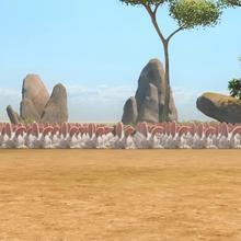 L'armée des lapins blancs !