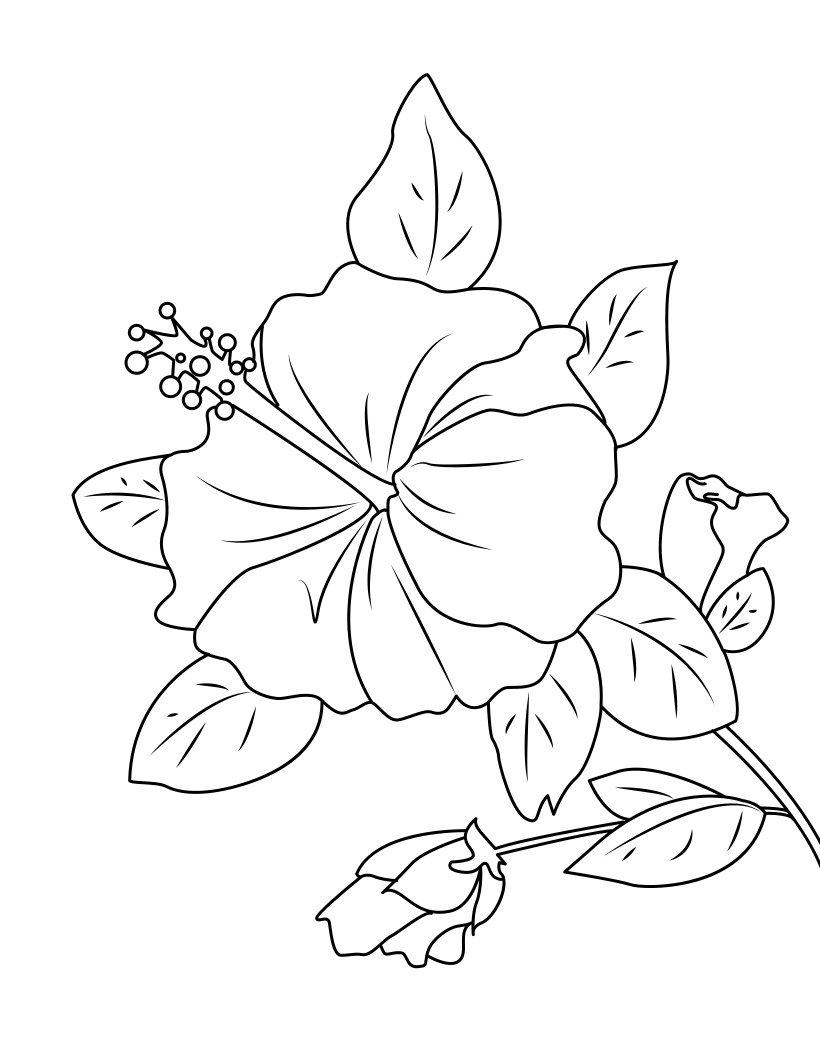 Hibiscus - Dessin hibiscus ...