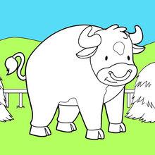 Coloriage : Bull dans son pâturage