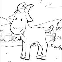 Chèvre à la basse-cour