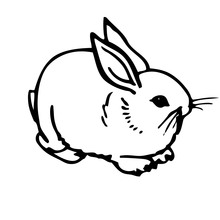 Domestic Rabbit V2