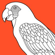 Coloriage d'un perroquet