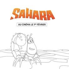 Sahara : Pitt