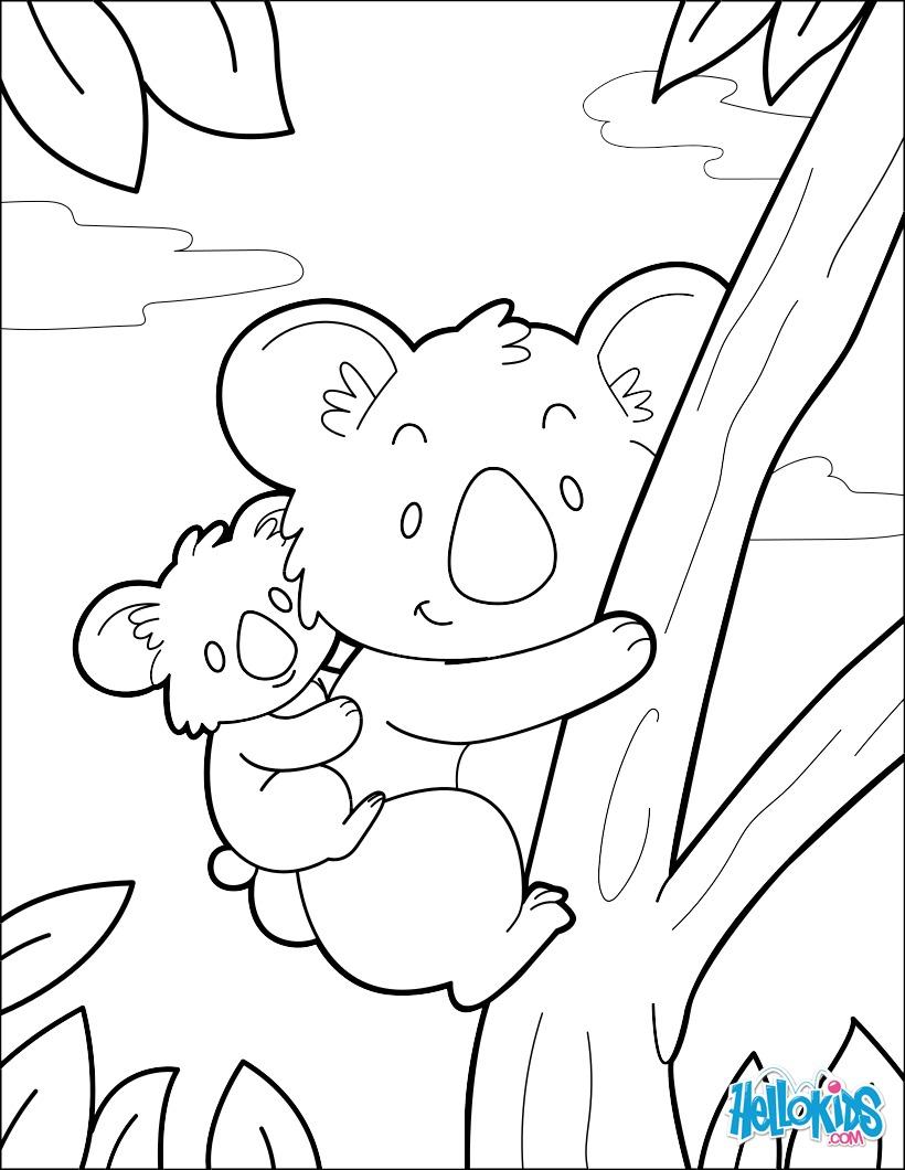 Coloriage : Koala