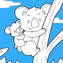 Coloriage Gratuit Koala.Coloriage Koala Coloriages Coloriage A Imprimer Gratuit Fr