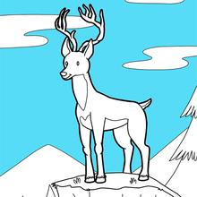 Coloriage : Le cerf