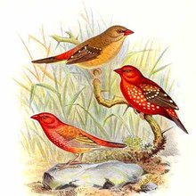 Histoire : L'Hirondelle et les Petits Oiseaux