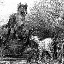 Histoire : Le Loup et l'Agneau