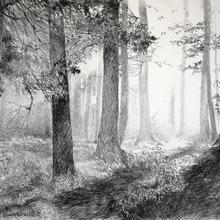 Conte : Les trois petits hommes de la forêt