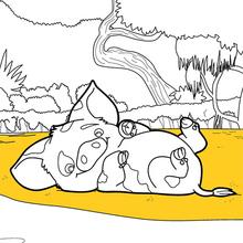 Coloriage Disney : Vaiana - Pua