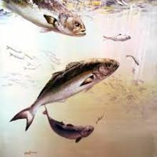 Histoire : La Reine des poissons