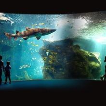 Histoire : L'aquarium de La Rochelle