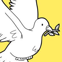 Le vol du Pigeon de la Paix