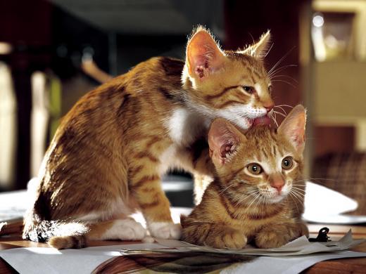 Comportement chats generalites le blog de labrajack - Foto de toilette ...