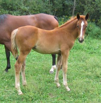 Series tv les chevaux et grand galop trop mimi - Coloriage chevaux grand galop ...