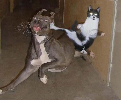 animaux-chien-chat_va0.jpg