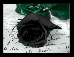 *Roses noires...*