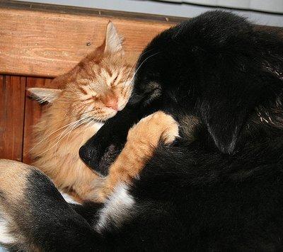 http://images.jedessine.com/_uploads/membres/articles/20080624/100kv_23nox_chat-chien-hug-noir_sqo.jpg