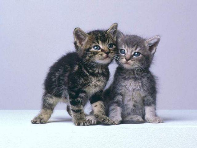chats mimis