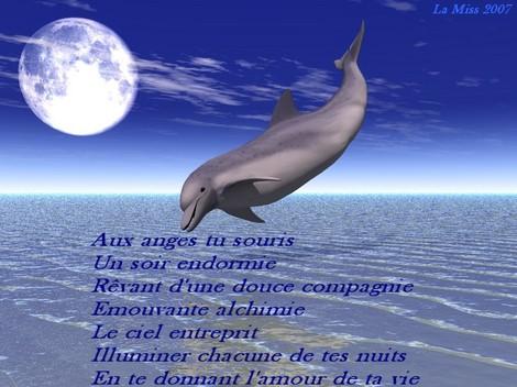Transmutation..... à la recherche de la paix intérieure ..... ( 4 ) - Page 12 Dauphin_pfj