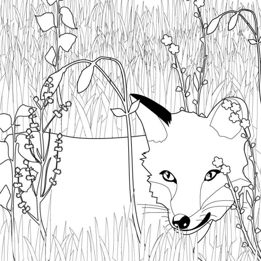 Coloriages coloriage du renard dans l 39 herbe - Coloriage renard ...