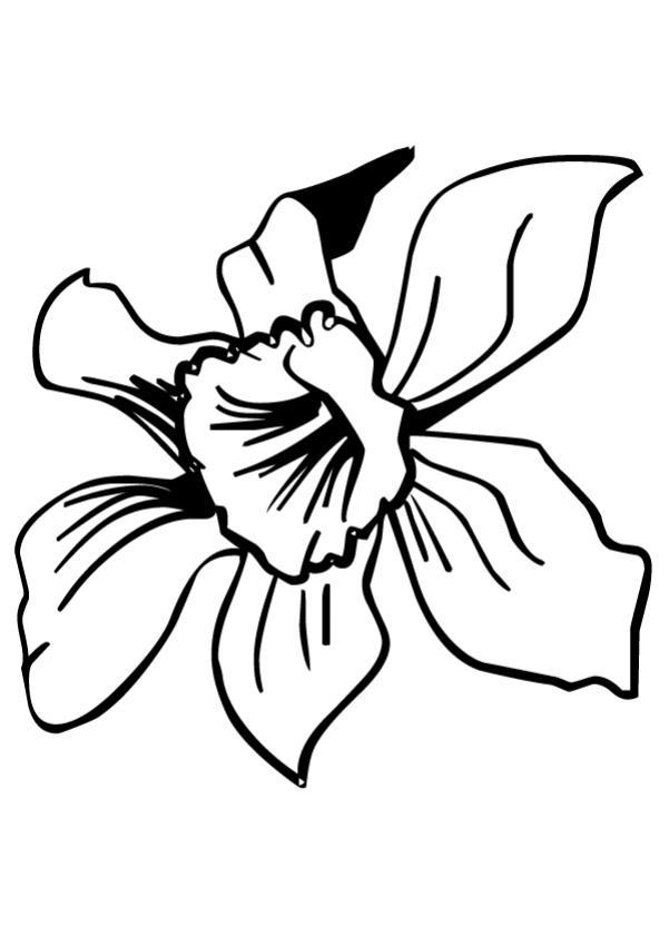 Dessiner+des+fleurs