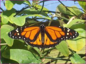 galerie-photos-de-la-ferme-aux-papillons
