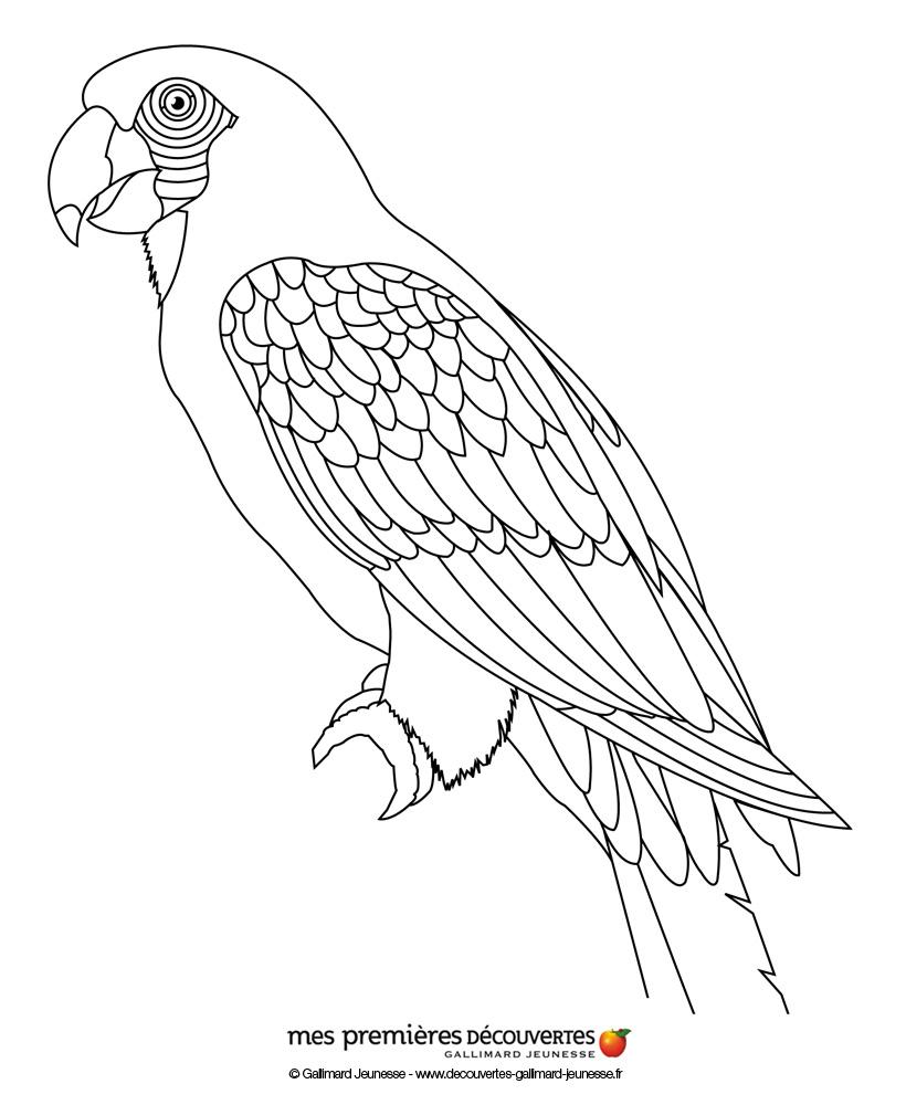 Coloriage perroquet imprimer - Perroquet dessin ...