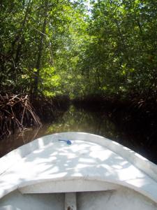 les-mangroves