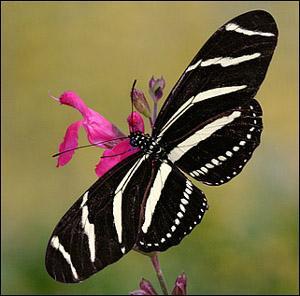 Contes pour enfants les papillons tropicaux lire - Images de papillon ...