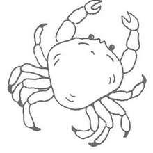 Coloriages Crabe A Colorier Fr Hellokids Com