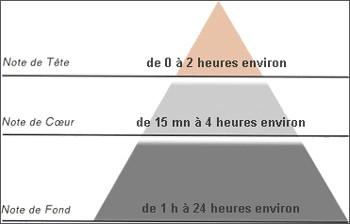 Les parfums (Explications, comment les faire soi-même) Pyramide-olfactive-source_2ty