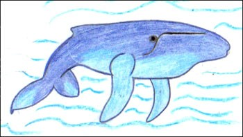 Comment Dessiner Une Baleine A Bosse Fr Hellokids Com