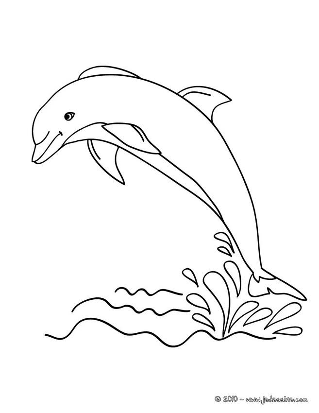 coloriage d un dauphin hors de l eau