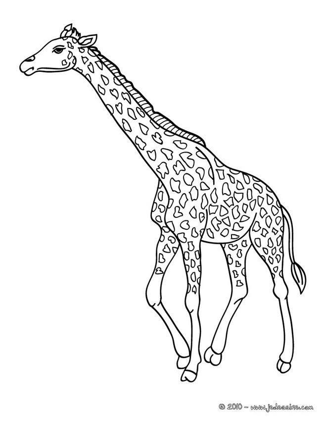 Coloriages Coloriage D Une Girafe Dans La Savane Fr Hellokids Com