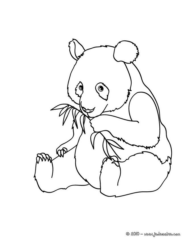 Coloriages Coloriage D Un Bebe Panda Fr Hellokids Com