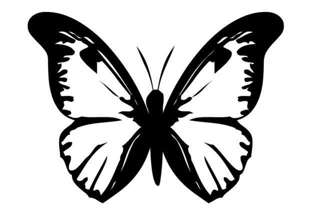 Image Dessin Papillon Slubne Suknie Info