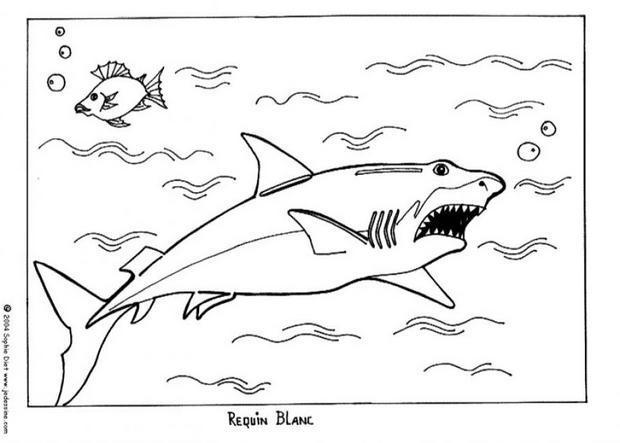 Coloriages Requin Blanc Fr Hellokids Com