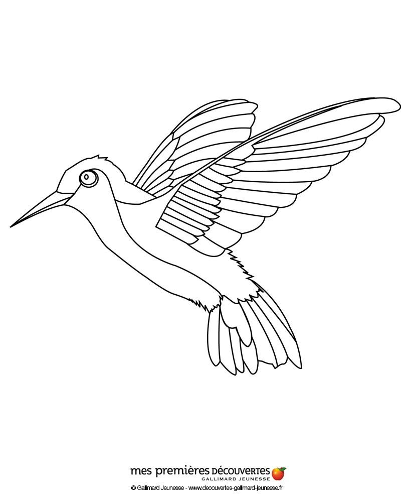 Coloriages coloriage d'un colibri - fr.hellokids.com